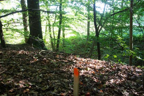 Även inne i skogen finns markeringar inför bygget. En bit av vår vackra skog kommer att bebyggas. Foto: Per Hallén 12 juli 2014