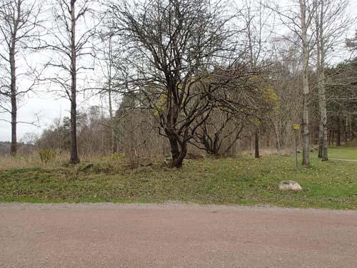Här låg torpet Ringshåla. Foto: Per Hallén 2014.