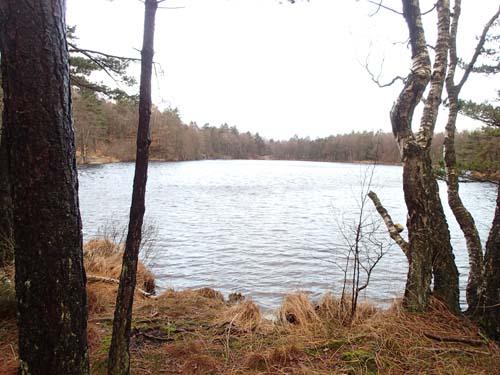 Furåstjärn, norr om Kåsjön