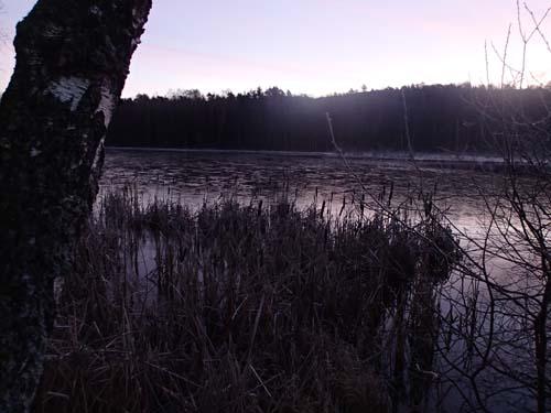 En tunn hinna av is hade lagt sig på vattenytan denna söndag.