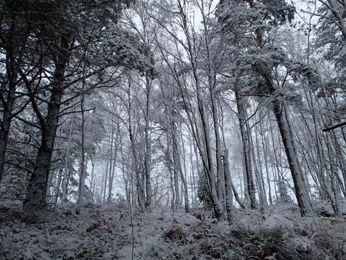 Snö på träden och ett mycket speciellt ljus. Foto: Per Hallén 2014
