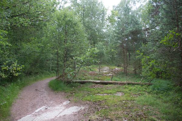 Hällen rak fram i bild, bortanför det fallna trädet, är den som Linné besökte. Foto: Per Hallén 2015