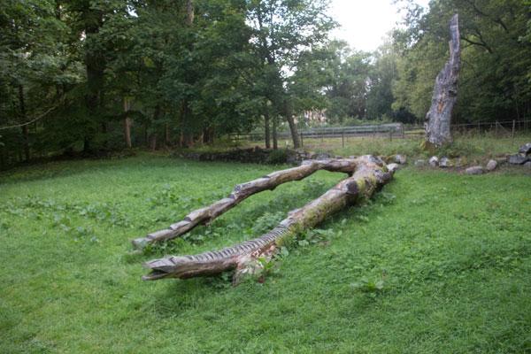"""Ett fallet träd har fått en """"konstnärlig"""" utformning. Foto: Per Hallén 2015"""