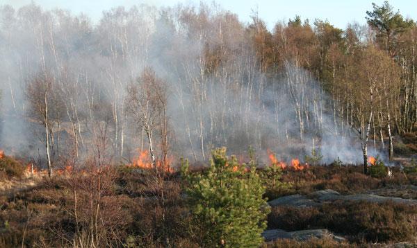 Ljungbrand