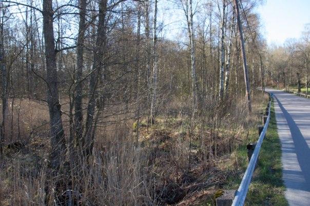 Storebäcken letar sig fram genom det som förr var åkermark. Foto: Per Hallén 2016