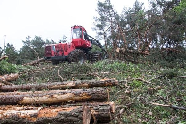 Skogen vid Torpagatan försvinner snabbt. Foto: Per Hallén 2016.