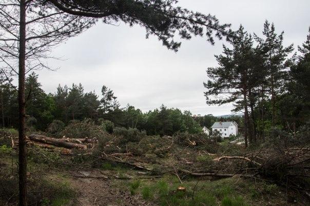 Under veckan har ganska många träd fallit för skogsmaskinen. Foto: Per Hallén 2016.