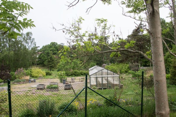 Dagens växthus i parken. Foto: Per Hallén 2016.
