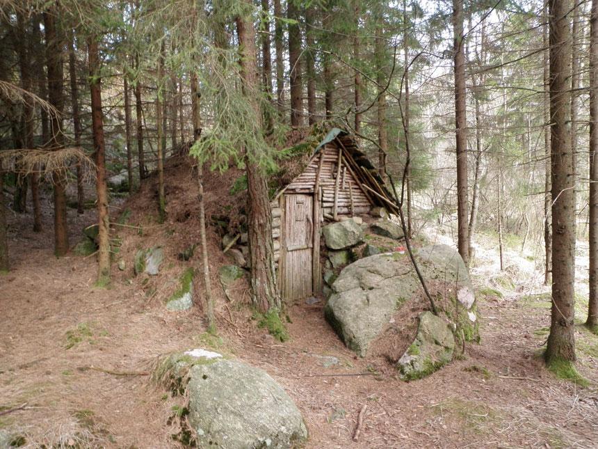 Denna koja finns dold i Delsjöskogen - var avslöjas inte! Foto: Per Hallén